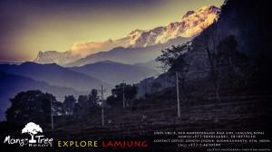 mango-tree-nepal-I