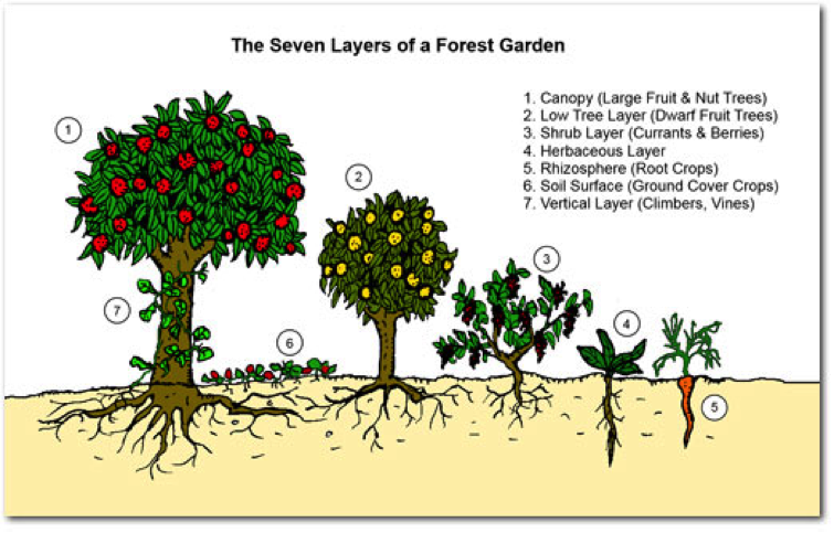 7-layers-of-the-forest