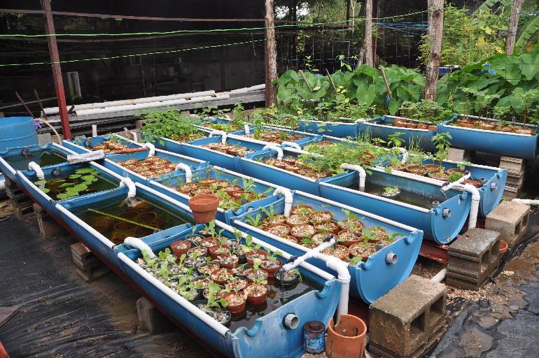 Aquaculture permaville for Koi aquaponics