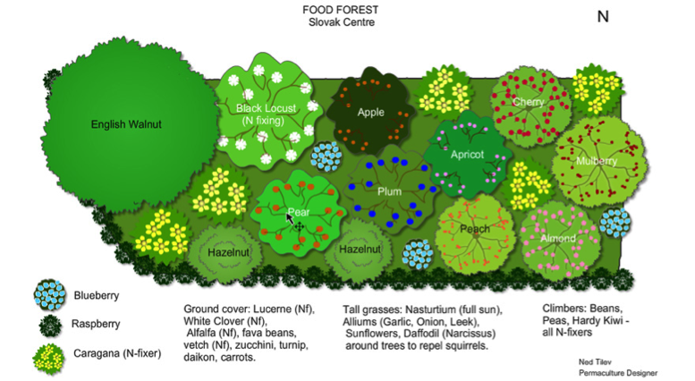 food-forest-design