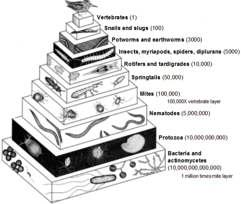 organisms-in-the-soil