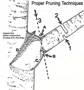 pruning-techniques