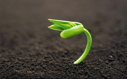 seed-growing