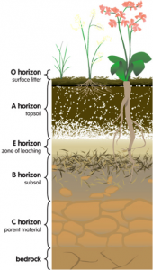 soil-horizons
